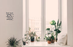 Ideas to Decorate your Home with Indoor Plants